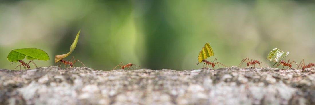 mravenci v kredenci.jpeg